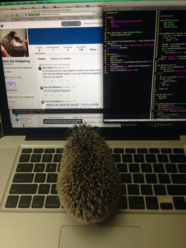 twitter bot hedgehog
